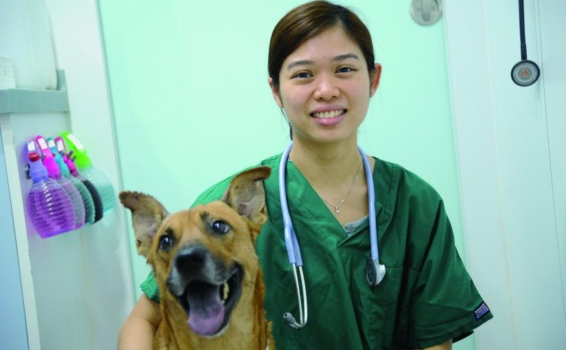 做獸醫得力助手 助理具備動物疾病、護理知識