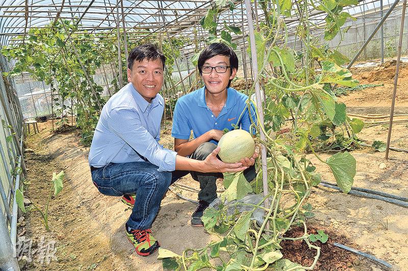 27歲的莊恩傑(右)謝絕智能手機的引誘,專心務農。他近月在上水租下一片4萬呎土地,種植多款有機蔬菜,包括他手中快可收成的蜜瓜。青協副總幹事魏遠強(左)讚賞他年紀輕輕便定下多個目標,故青協社會創新中心給予他5萬元資助,協助其發展農莊。(蘇智鑫攝)