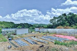 為了打理農莊,莊恩傑越洋「敲門」向台灣農耕專家求教,結果學懂以益生菌處理法,縮短無花果的生長周期,從而提高產量約兩成。(蘇智鑫攝)