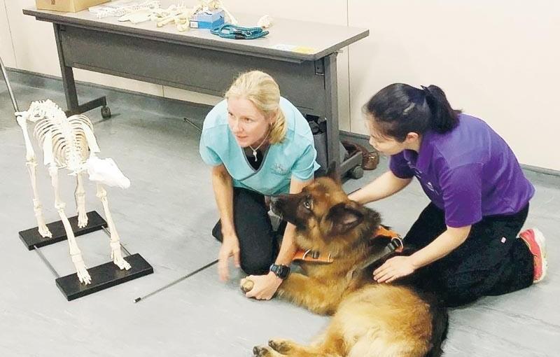 寵物主人轉型動物護理員  裝備專業技能  樂與人和動物溝通