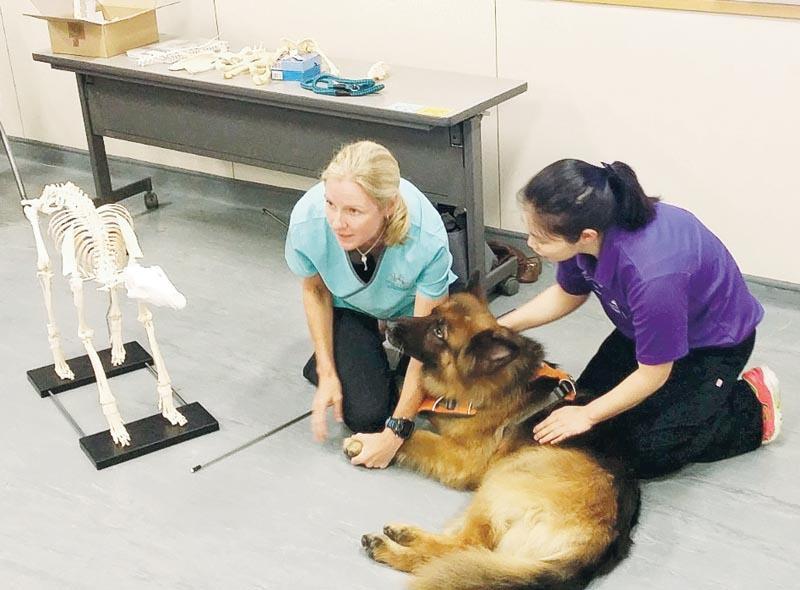 導師透過狗狗 Asko,與同學講解應用解剖學及生理學的知識。
