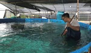 要確保水質潔淨,就要定時把魚排泄物刷到池中心的渠道沖走。