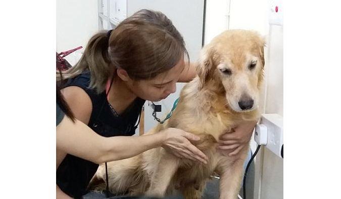 寵物美容師 需與寵物溝通建立關係